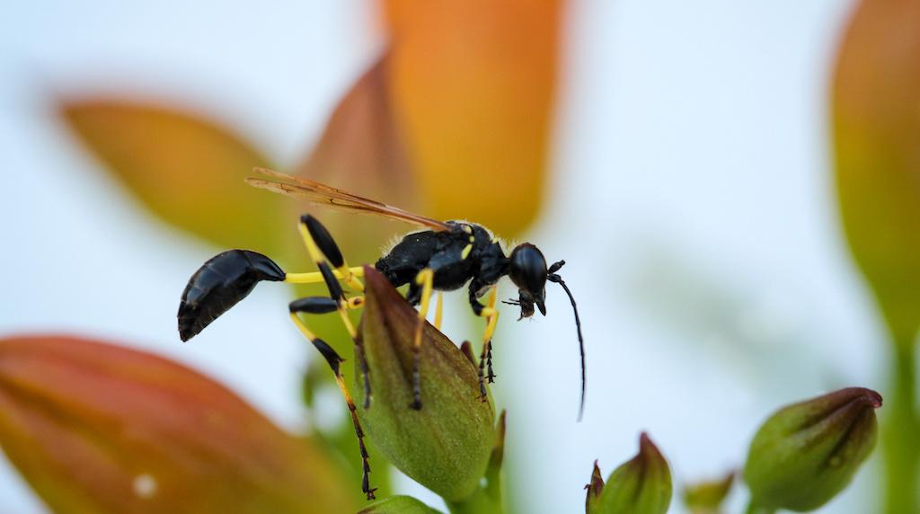 ハチ毒アレルギーとアナフィラキシーについて